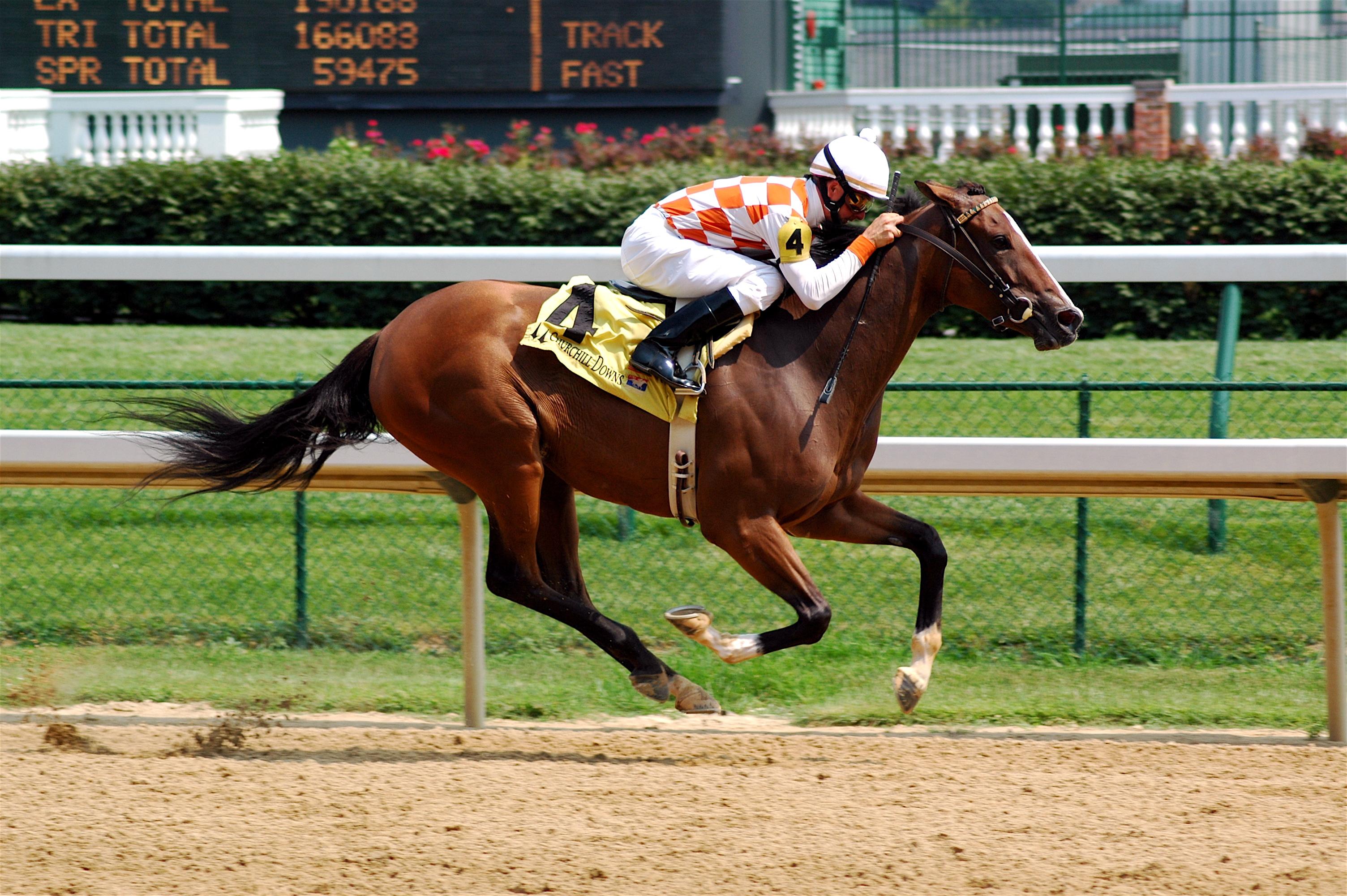 racing post horse racing tips